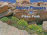 Pikes Peak Flowers